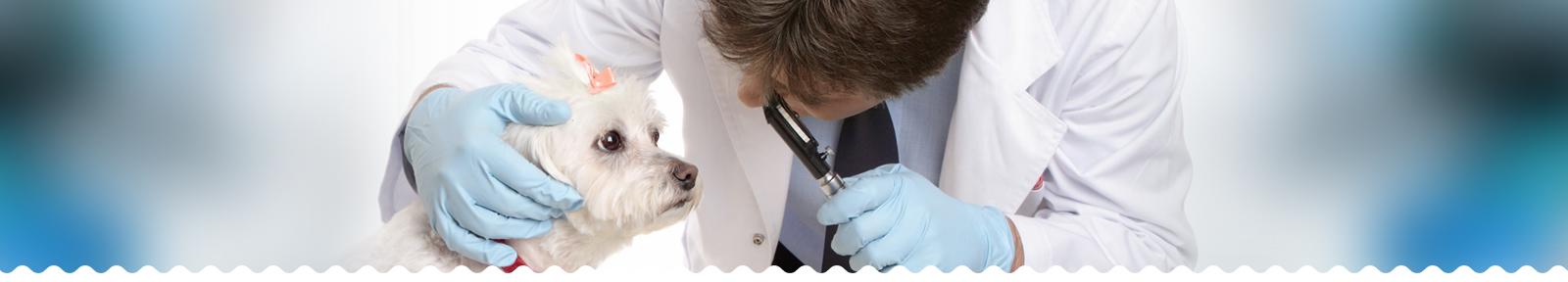 Офтальмологические обследования и операции