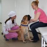 Собака и её хозяйка в ожидании приема у ветеринара.