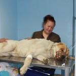 Во время интенсивной терапии владелец находится радом со своим любимцем, что заметно уменьшает волнение животного.