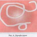 Дирофиярия