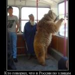 Медведь в троллейбусе