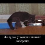 желудок у котёнка меньше напёрстка