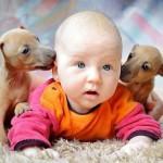 Младенец и таксы