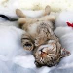 Кошка под наркозом